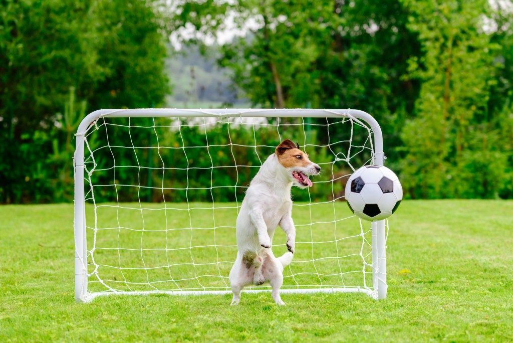 dog blocking the soccer ball